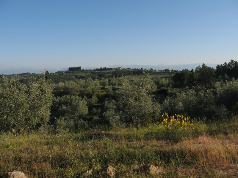 Collebrunacchi